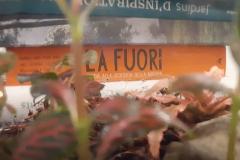 cura-del-terrario-R-nel-bosco-Reggio-Emilia-2-e1543066918943