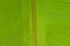il-verde-rilassa-R-nel-bosco-1