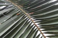 il-verde-rilassa-R-nel-bosco-15