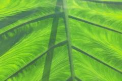 il-verde-rilassa-R-nel-bosco-5