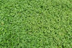 il-verde-rilassa-R-nel-bosco-8