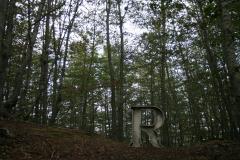 prove-tecniche-di-erre-nel-bosco-4