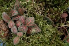 terrari-R-nel-bosco-reggio-Emilia-22