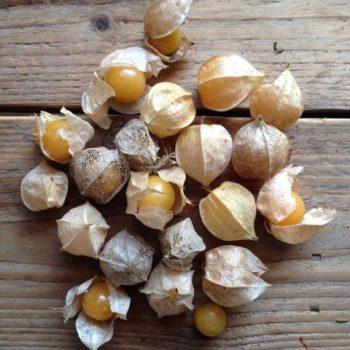semi piccolo seeds frutti - R nel bosco