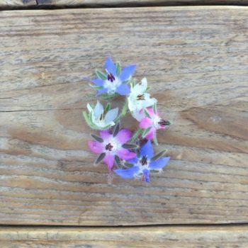 semi piccolo seeds fiori eduli - R nel bosco