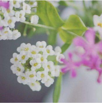 bouquet di carta - R nel bosco