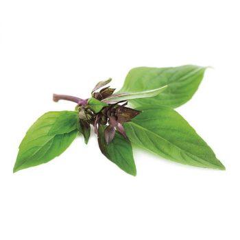 semi piccolo seeds basilico thai - R nel bosco