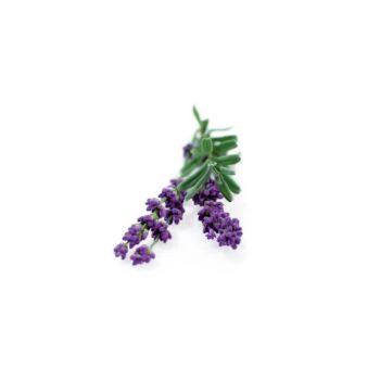 semi piccolo seeds fiori eduli lavanda - R nel bosco