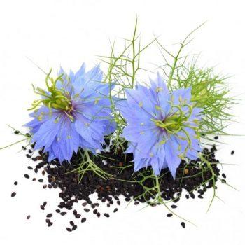 semi piccolo seeds fiori eduli nigella - R nel bosco