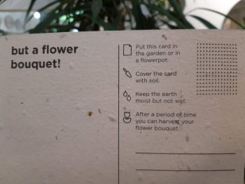 cartoline da seminare spruitje - R nel bosco