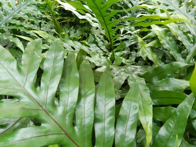 il verde rilassa - R nel bosco