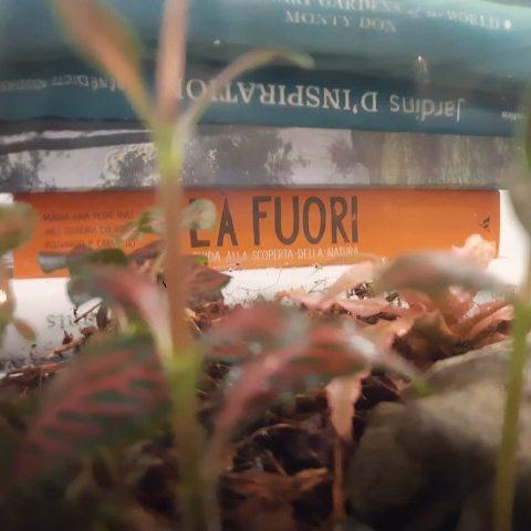 cura del terrario - R nel bosco - Reggio Emilia