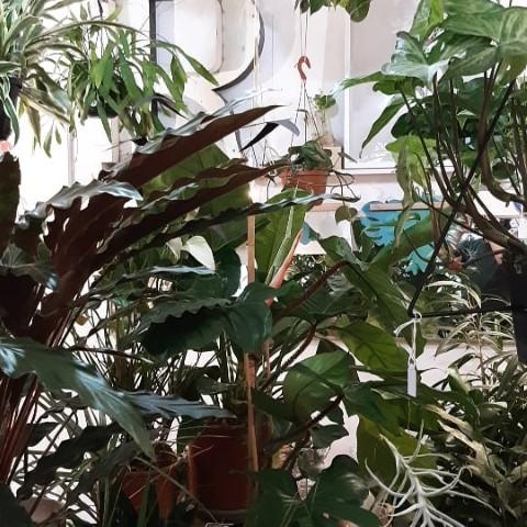 cura delle piante da interno - R nel bosco