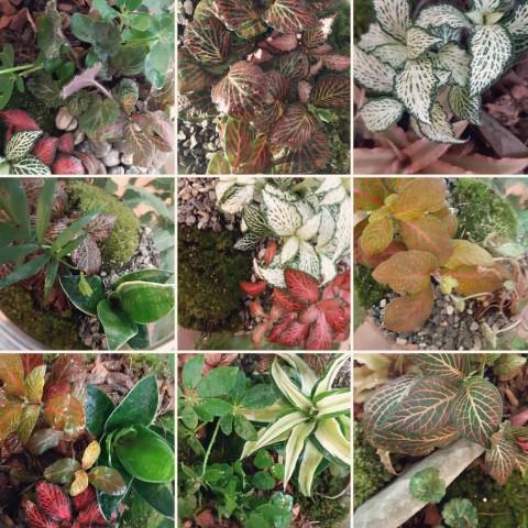 ecosistemi in viaggio - R nel bosco