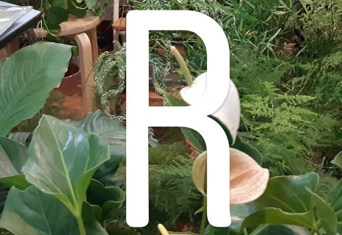 piante da interno - le preferite del 2018 - R nel bosco