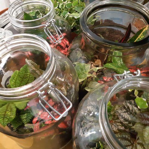 Workshop - Paesaggi sotto vetro - come creare un terrario - R nel bosco