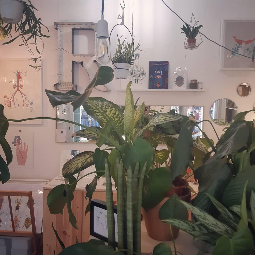 nuova pelle - R nel bosco - laboratorio botanico - Reggio Emilia