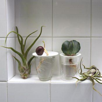 germinatore in ceramica - R nel bosco - Reggio Emilia