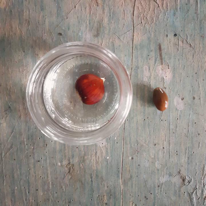 semina alberi - consigli sulla semina - R nel bosco
