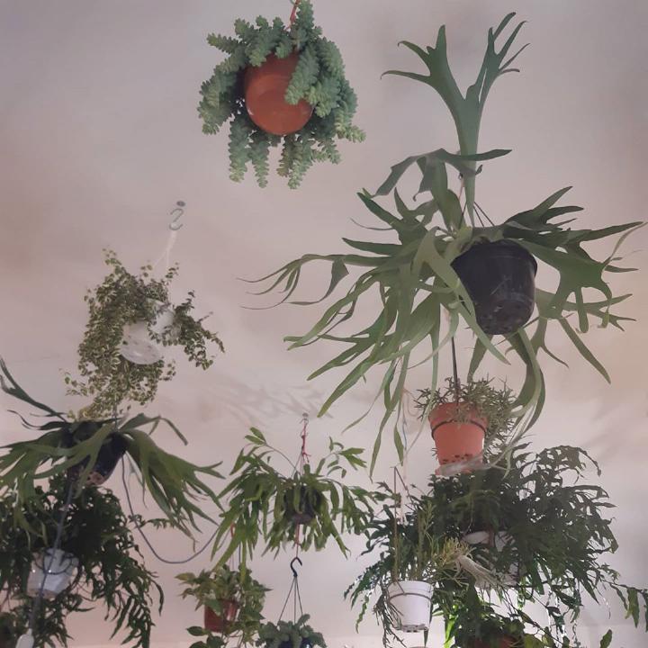 piante sospese e foglie volanti - R nel bosco