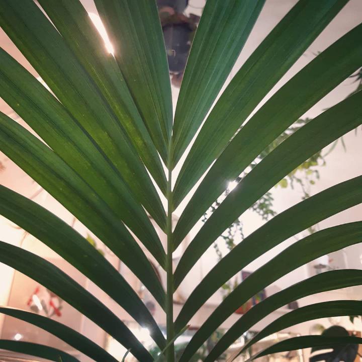 R nel bosco - palme