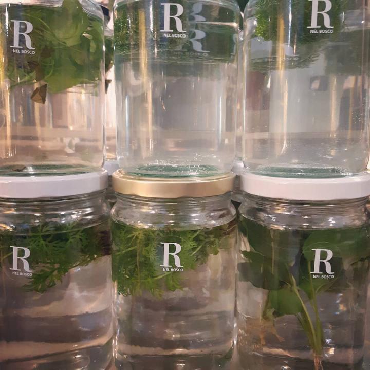 R nel bosco - piante flottanti