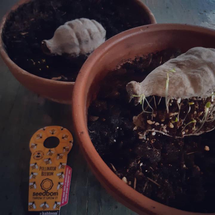 Semi bombe seedbombs protezione della natura blühpflanzen per api semi sfere