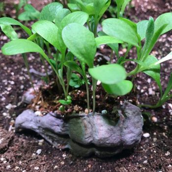 seedbomb - bombe di semi - seedbom - in crescita - R nel bosco