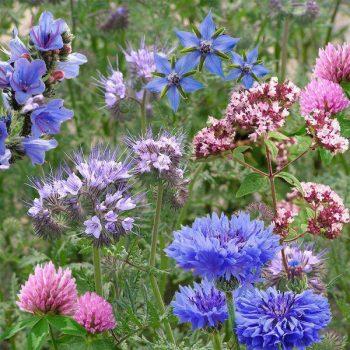 bombe di semi - seedbom pollinator beebom - R nel bosco