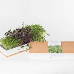 Grow Box - kit per coltivare microgreens - Trio - R nel bosco