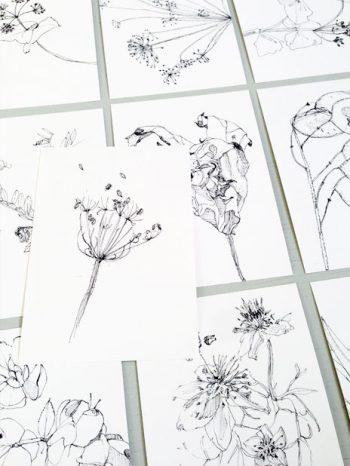 cartoline 10 floral drawings - 10 fiori illustrati - R nel bosco