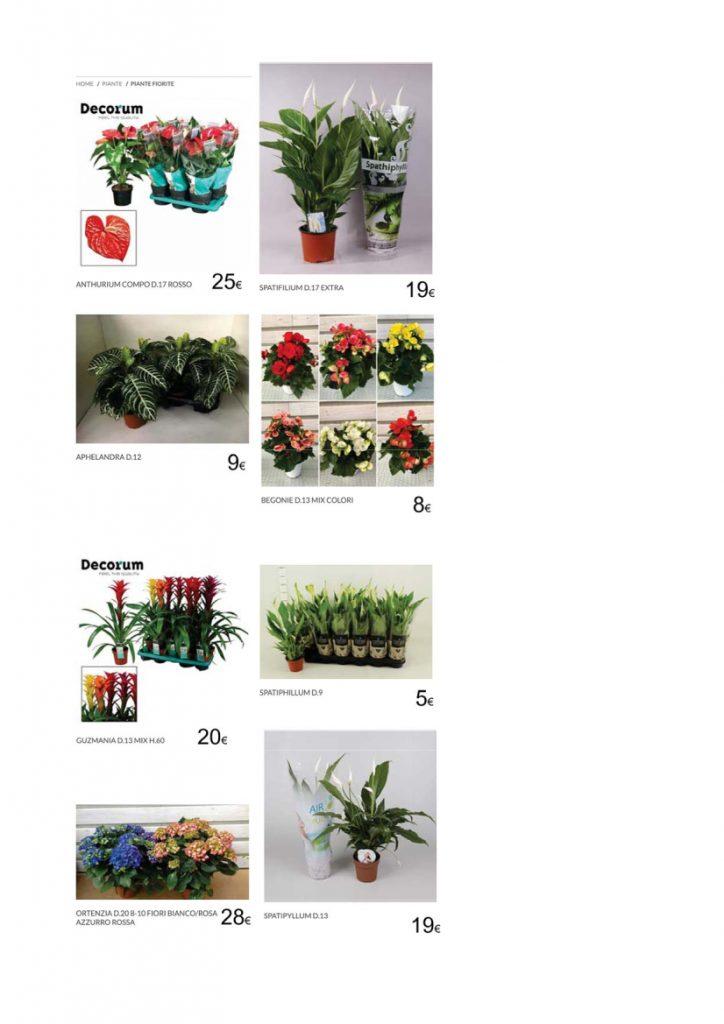 catalogo piante da interno - 06.04.2020 - R nel bosco - Reggio Emilia