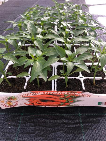 orto a domicilio - orticole e aromatiche - R nel bosco - peperone piccante lungo
