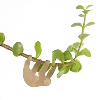 plant animal - R nel bosco - Sloth 3