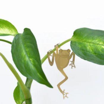 plant animal - R nel bosco - tree frog 2