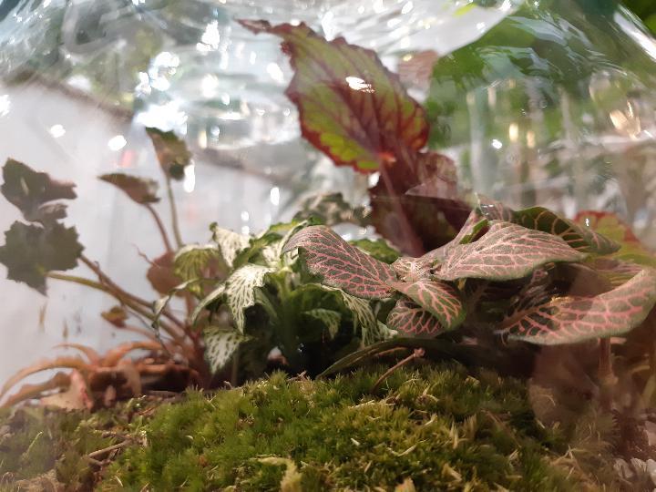giungla in casa - come crearla - consigli e suggerimenti - R nel bosco