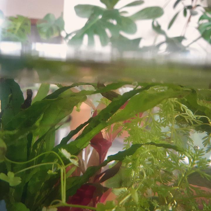 acquario di piante - come crearla - consigli e suggerimenti - R nel bosco