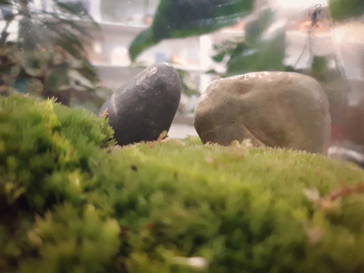 muschio - come crearla - consigli e suggerimenti - R nel bosco