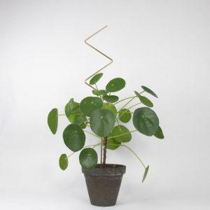 supporti per piante - zigzag - Golden plant stake - R nel bosco