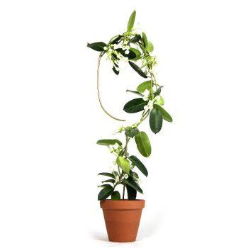 arch - Golden plant stake - R nel bosco (10)
