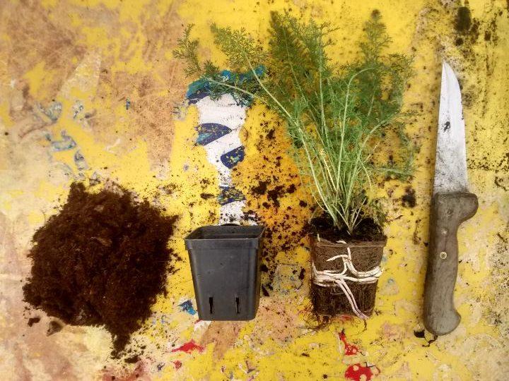 orto casalingo - come realizzarlo - consigli e cura - R nel bosco