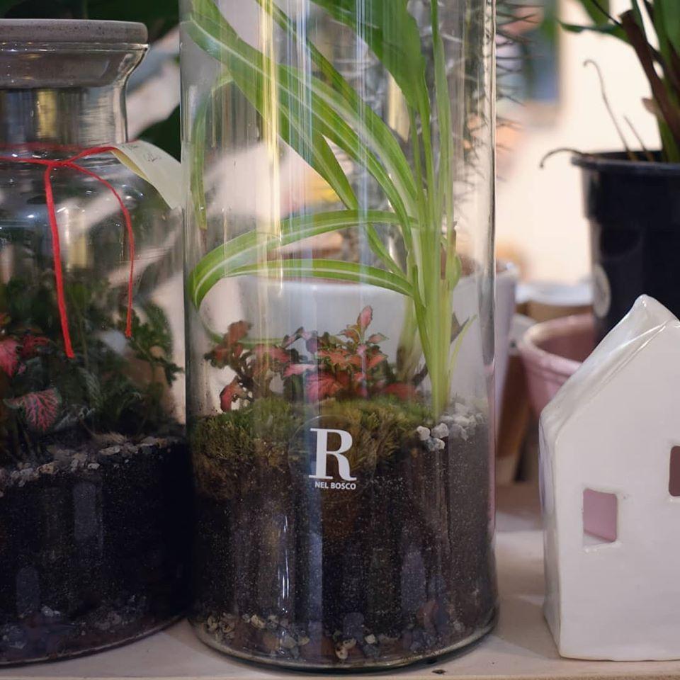 piccoli progetti - progettazione del verde - giardini e terrari - R nel bosco